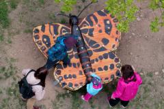 motyl-zhora